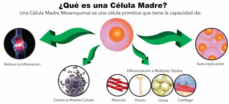 beneficios de las células madre