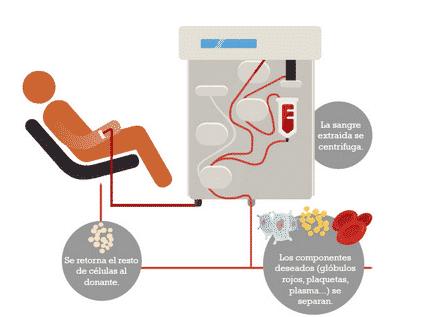 cómo conseguir las células madre