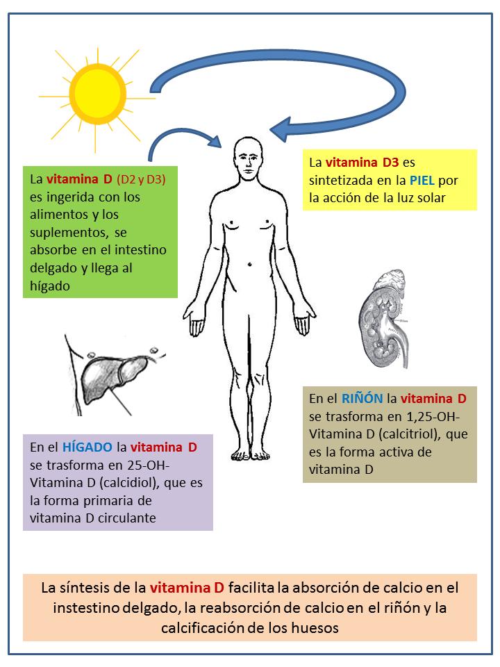 vitamina D confinamiento
